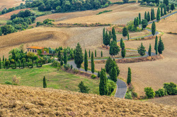 blog250px italy tuscany curled road overgrown cypress trees montichiello